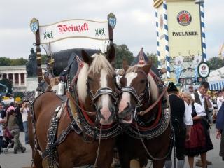 Pferde vom Trachtenumzug