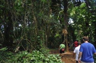 1-maunawili-falls-hike
