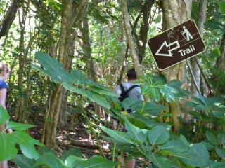 2b-kapaeleele-koa-trail
